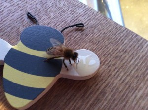 Bee on shoe